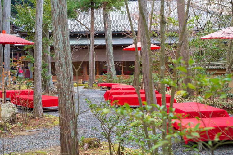 Table with red table cloth in nature setting Dining Japan Table Setting Nature Red Cloth Architecture Building Building Exterior Built Structure Day Empty Field Flower Flowering Plant Growth Kinkakuji Land Nature No People Outdoors Park Plant Playground Red Seat Tree