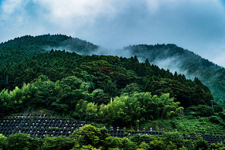 Scenic view of forest hill against sky on a rainy day in fukuoka, japan