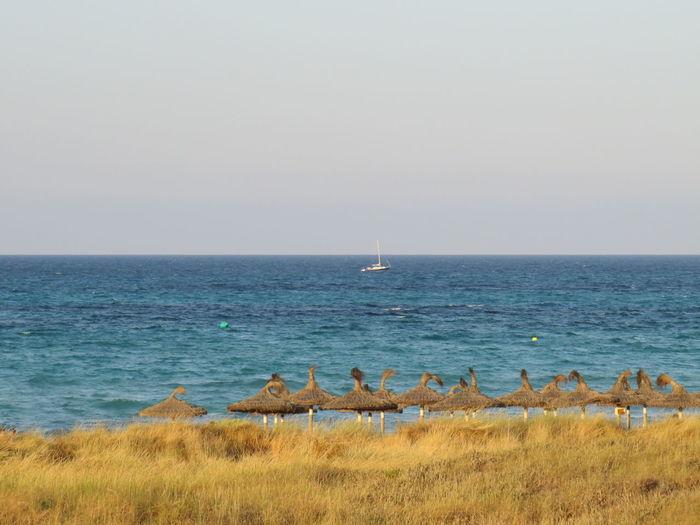 Photo 3 Beach Strandschirm Schirm Sombrilla Parasol Oceanview Bird Sea Flamingo