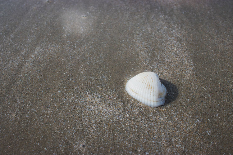 High angle view of seashell on sand