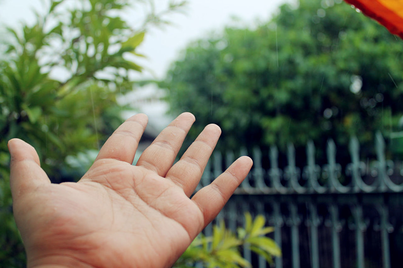 human hand, human body part, human finger, outdoors, one person, focus on foreground, real people, day, close-up, plant, tree, men, nature, sky, people