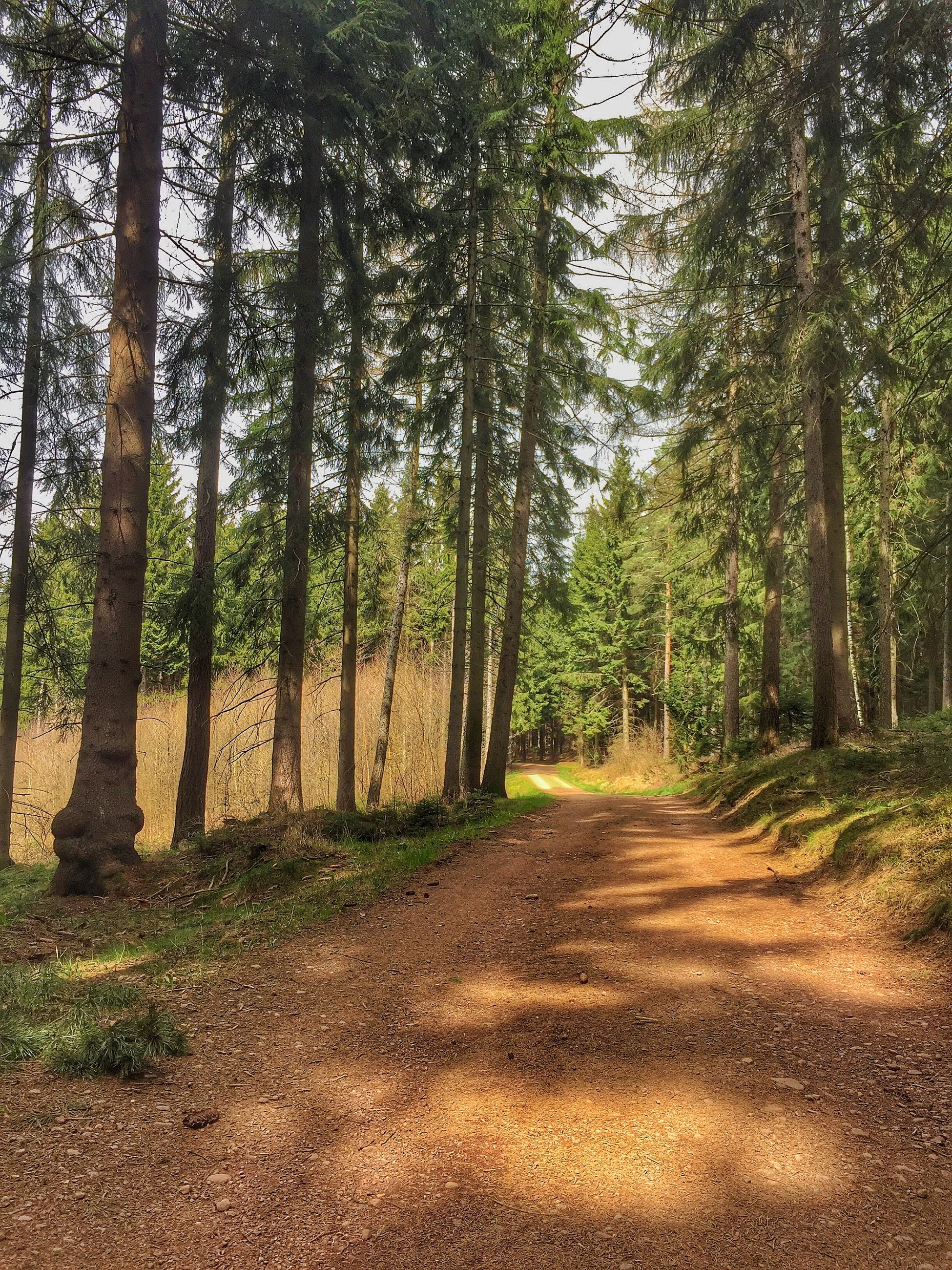 tree, the way forward, tranquility, tree trunk, tranquil scene, growth, dirt road, nature, forest, diminishing perspective, landscape, beauty in nature, treelined, scenics, vanishing point, woodland, footpath, sunlight, non-urban scene, day