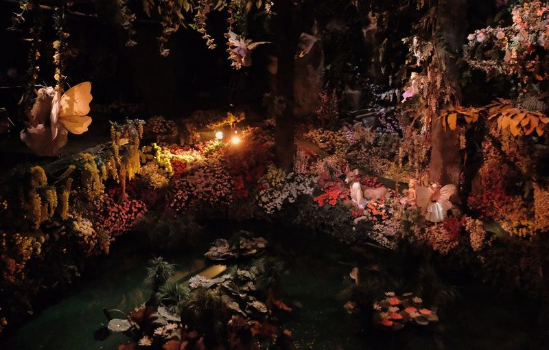 Attraction theme park the Efteling, Kaatsheuvel, the Netherlands. No People Illuminated Nature Water Night Outdoors Plant Glowing Flowering Plant Transparent Swimming Flower Lighting Equipment Tree Growth Glass - Material Business Creativity Marine