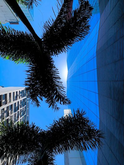 Tree Plant Low Angle View Sky Nature Growth Architecture No People Built Structure Building Exterior Day Leaf Palm Tree Blue Clear Sky Building Sunlight