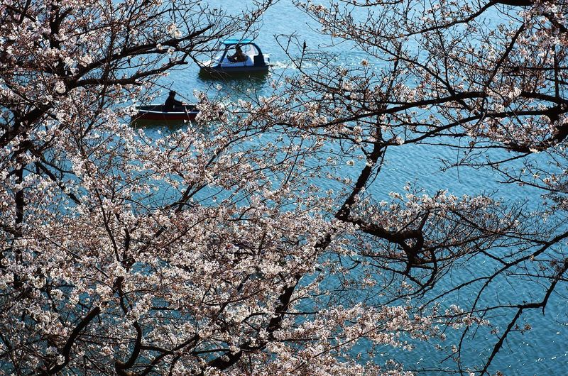 Boat Cherry Blossoms Full Frame Backgrounds Day Outdoors No People Nature Water