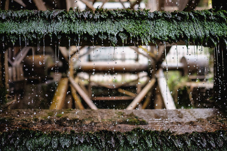 Water dripping from moss covered waterwheel