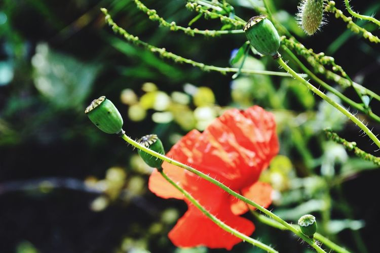 Nature Red Focus On Foreground Outdoors Growth Close-up Leaf Green Color No People Beauty In Nature Plant