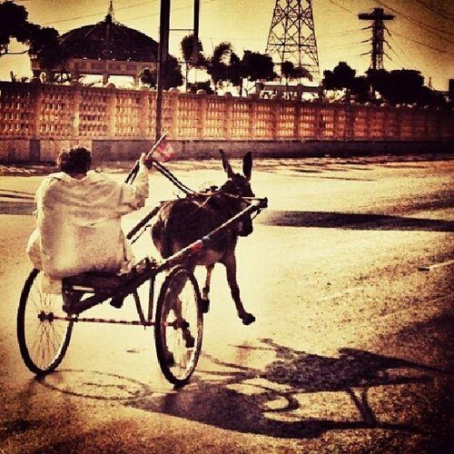 Donkey Cart DonkeyCart Race at Clifton rare now Karachi Pakistan