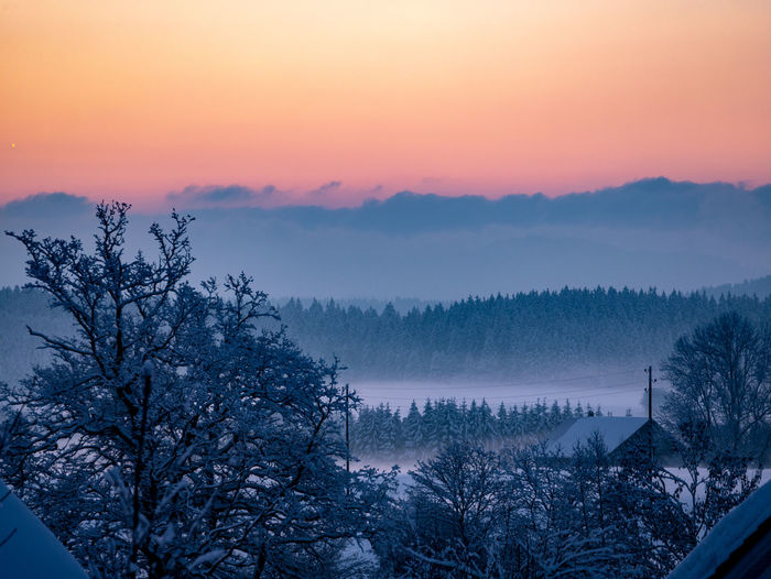 Tree Sky Beauty In Nature Winter Scenics - Nature Sunset Plant Cold Temperature Snow Tranquil Scene Tranquility Nature Mountain Non-urban Scene Idyllic Landscape Environment No People Fog Outdoors WoodLand Pine Tree