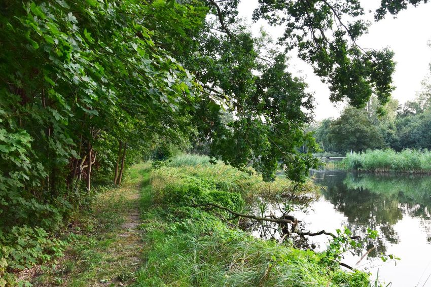 Rhinluch Beauty In Nature Day Environment Forest Green Color Growth Land Nature Naturelovers No People Non-urban Scene Outdoors Plant Reflection River Scenics - Nature Tranquil Scene Tranquility Tree Water WoodLand