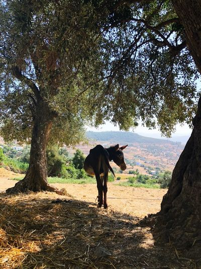 """Is that you Ele?"" ""Yes it's me my little donkey!"" Bucolic Landscape Bucolic Animal Animals In The Wild Sunshine Nature Beauty Rif Mountains Mountain Haddock Power In Nature Donkey Tree Plant Mammal Nature Vertebrate Land Day Outdoors"