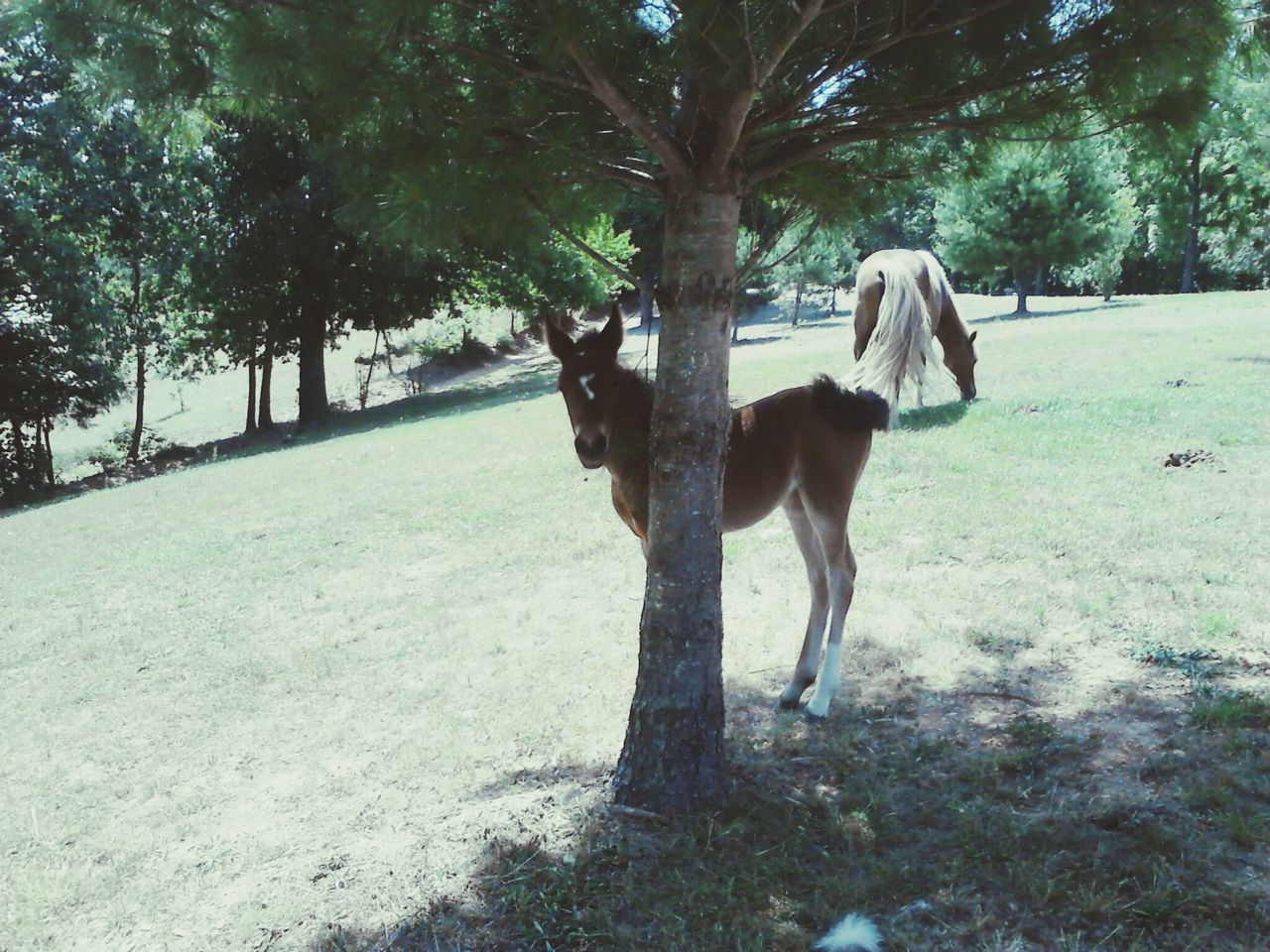 tree, mammal, horse, domestic animals, animal themes, dog, nature, no people, growth, standing, day, outdoors