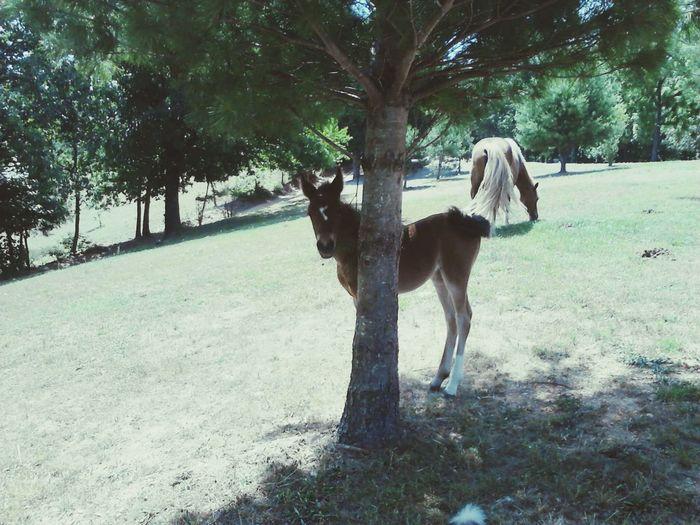 Horse Beauty Horsing Around Beautiful ♥ Horses Harriet Arkansas Arkansas_ozarks Baby Mama Hideandseek