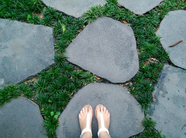 Can you spot the Centipede making its way towards me? Garden Insects  Point Of View POV Paving Stepping Stones Bangkok