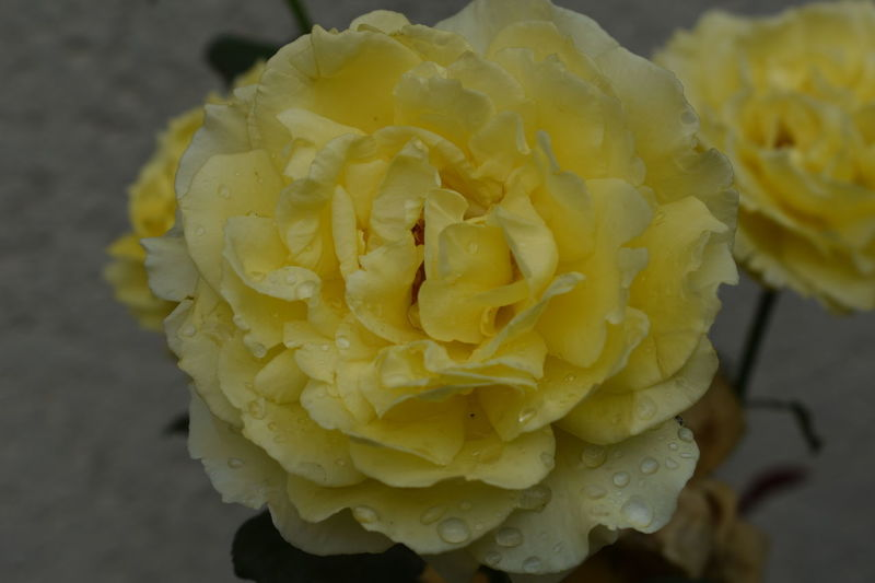 Fleur Fleur Jaune Flower Flowers
