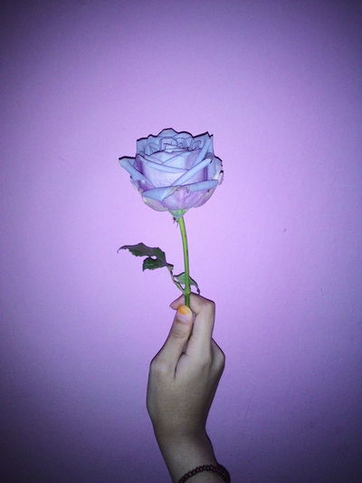 Thanks you for those who are following me. I'm very appreciate it😘 come and take the pinky rose. hehe😳