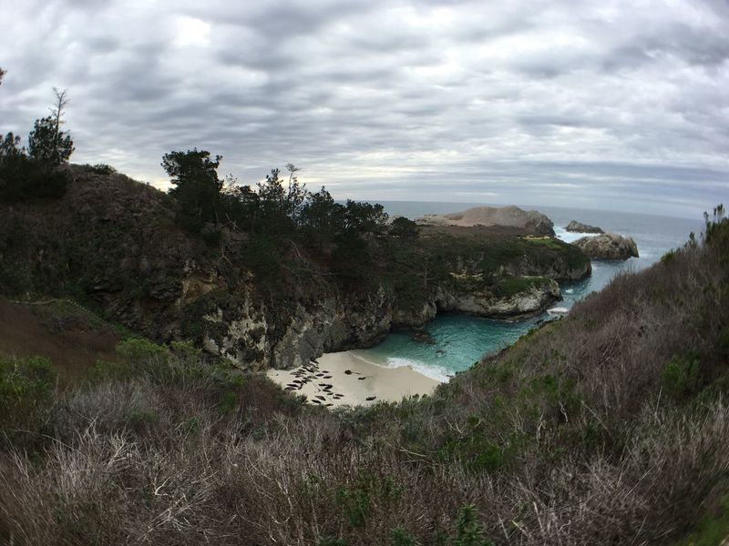 The Great Outdoors With Adobe Point Lobos California State Parks Carmel-by-the-sea Seals Seal Beach Pacific Ocean Wildlife Found On The Roll