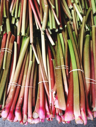 Close-up of rhubarb stalks