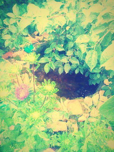 республикабашкортостан прудик дома в саду и яблоня решила спустить туда свои ветви)) цветы🌸🌼🌻💐🌾🌿 астры красота