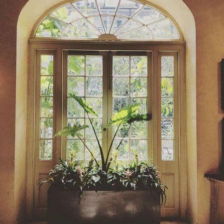Window Indoors  Potted Plant Plant Neworleans Neworleans La Hello World! Windows Hotel Burbon Street