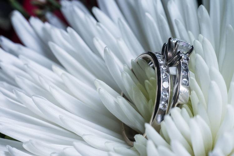 Close-up of diamond ring on flower