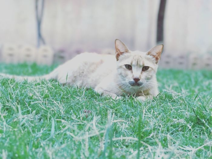 Domestic Cat Animal Themes Cat First Eyeem Photo