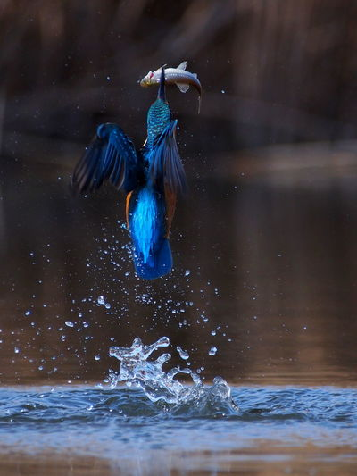 View of bird in water