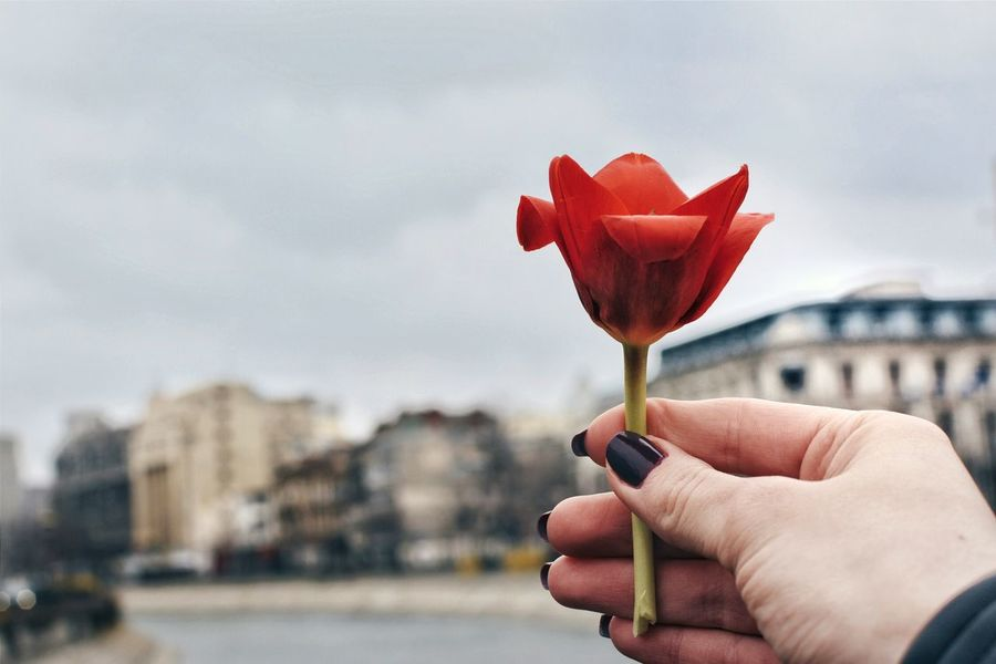 Personal Perspective Person Holding Hands Flowers Spring Flowers Tulip Close-up Red Flower Sky Sky_collection Sky And Clouds Romania City Cityscapes Urban Beautiful Nature Photography People Photography Outdoors Building Exterior Buildings & Sky Market Reviewers' Top Picks