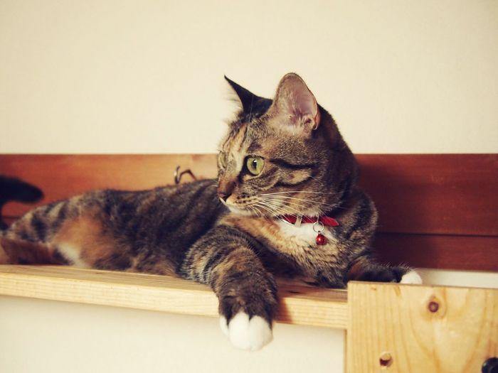Cat Love Mypet Japan First Eyeem Photo