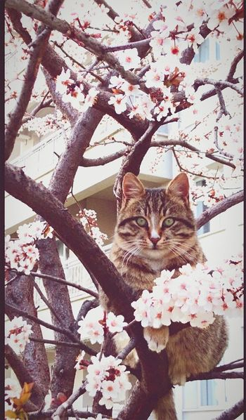 Tree One Animal Pets Flower Outdoors Sky Day Nature No People Cats 🐱 Cute Cats Cat Catsag