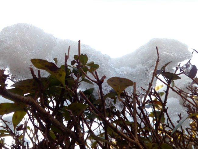 chunk of snow Nature Growth No People Day Outdoors Plant