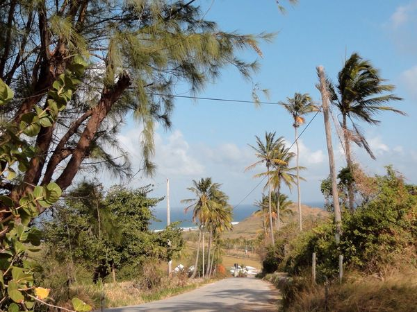 The Way Forward Country Road Road Trip Palm Trees Barbados Sunny Day