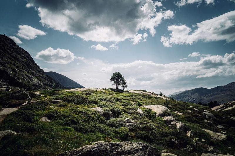 A tree among the mountains Andorra🇦🇩 Ordino Andorra Hiking Nature Photography Mountains Nature_collection Beauty In Nature Tree Cloud - Sky Plant Sky Beauty In Nature Growth Tree Tranquility Nature Mountain Scenics - Nature Tranquil Scene Day No People Green Color Environment Landscape Sunlight Mountain Range Outdoors Land Idyllic