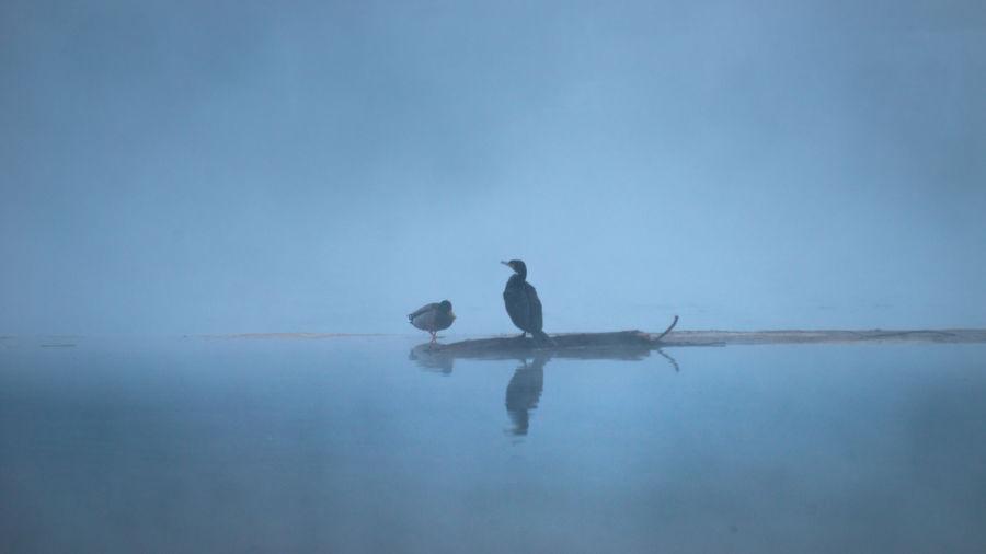 Birds on a sea