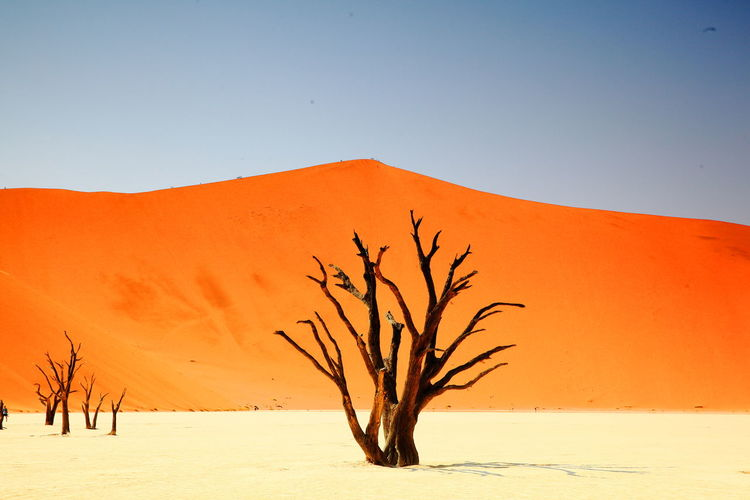 Deadvlei Death Namibia Sossusvlei Arid Climate Bare Tree Beauty In Nature Branch Clear Sky Day Landscape Nature No People Outdoors Remote Sand Dune Scenics Sky Tranquil Scene Tranquility Tree