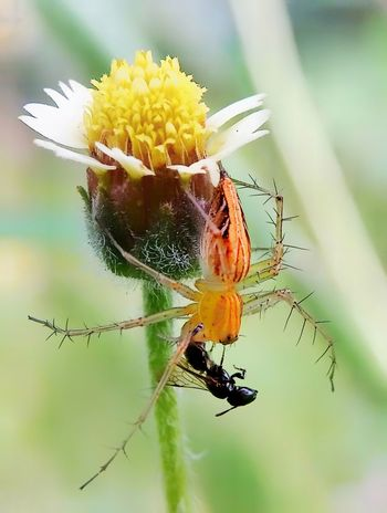 spider Insect Flower Animals In The Wild Animal Wildlife Nature Fragility Animal Themes