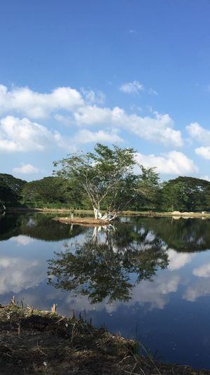 Árboles Water Sky Reflection Cloud - Sky Plant Tree Lake Nature Tranquility No People Day Scenics - Nature Beauty In Nature Tranquil Scene Reflection Lake