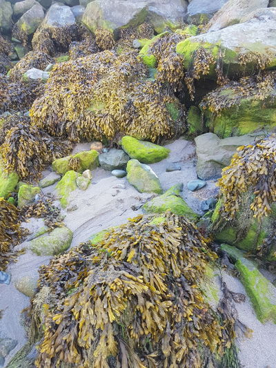 moss ,pebbles
