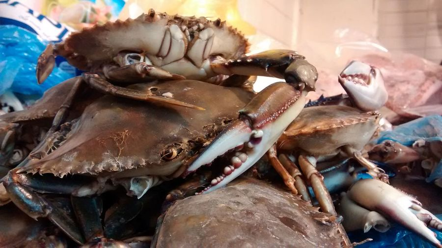 Stack of dead crabs