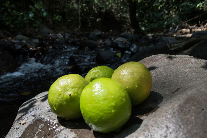 Lemon at the river Costa Rica Costa Rica Y Su Naturaleza Costa Rica 🇨🇷 Costa Rica❤ EyeEm Nature Lover EyeEm Ready   Close-up Day Eyeem Fruits Eyeem River Food Food And Drink Freshness Fruit Green Color Healthy Eating Lemon Nature Nature Lover No People Outdoors Water Food Stories