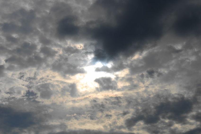 Gaviota Nubes Nubes Y Cielo Barco Abejorro Plantas Nature No People Outdoors