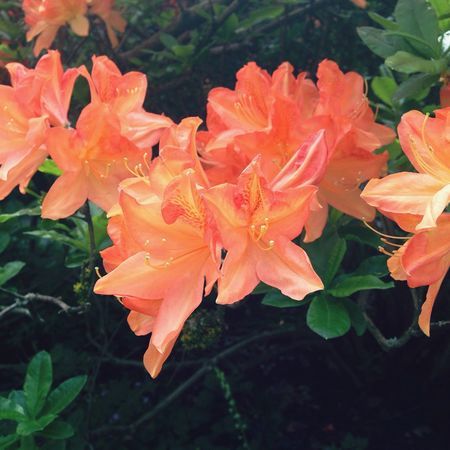 VanDusen Botanical Garden is amazing Flower Nature Beauty In Nature Orange Color Blooming Outdoors Plant First Eyeem Photo