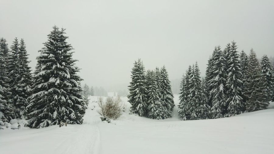 Lower visibility Trees Wintertime Snow ❄ Nature Nature_collection Nature Photography No People Woods Hiking Tree Spruce Tree Snowing Snow Mountain Cold Temperature Wilderness Area Winter Forest Polar Climate Deep Snow Evergreen Tree Pine Woodland Snowcapped Mountain Snowflake Blizzard Ski Track Powder Snow