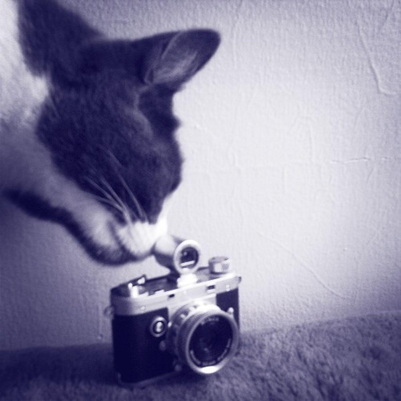 I Spy A Camera