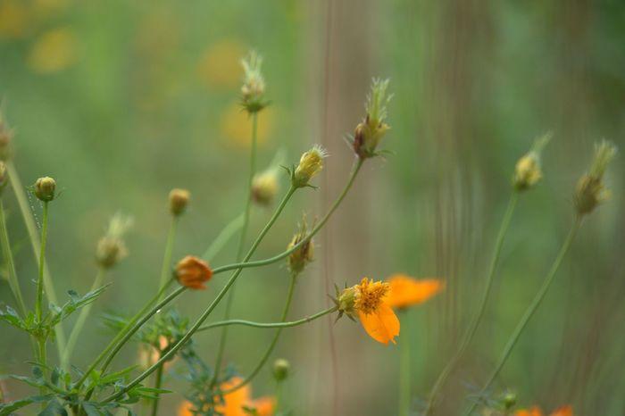 Blurs Botany Flower Flowers Growth Nature Plant Selective Focus Stem