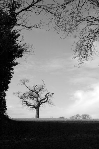 Winter's Tree Bare Tree Beauty In Nature Black And White Blackandwhite Branch Field Isolated Landscape Nature Outdoors Plant Sky Tranquil Scene Tranquility Tree Tree Trunk Trunk