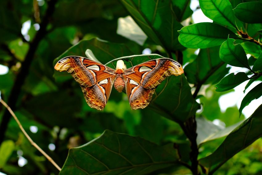Butterfly Leaf City Full Length Butterfly - Insect Insect Animal Themes Close-up Plant