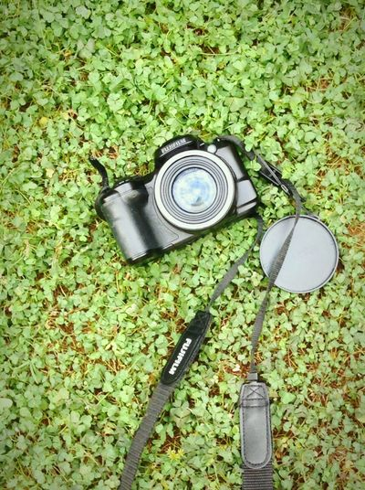 It all starts with a single photo Grass High Angle View Outdoors Day Tranquility Green Color First Eyeem Photo