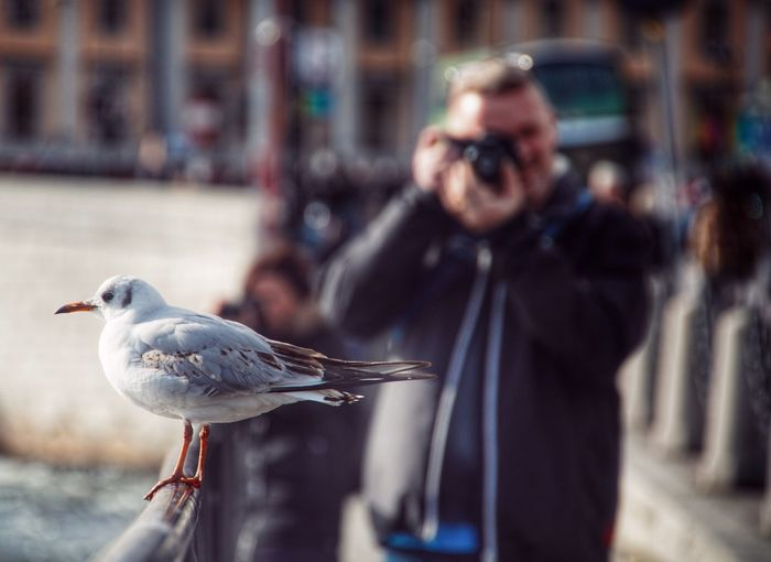 Man photographing seagull perching on railing