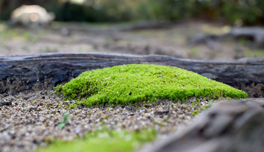 Oasis Green Color Selective Focus Plant Nature No People Growth Day Moss Close-up Grass Land Outdoors Solid Seedling Field Vegetable Beauty In Nature Rock Food Surface Level Small Garden Path Hedge Oasis